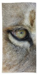 Beach Towel featuring the photograph Eye Of The Lion by Judy Whitton