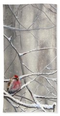 Eyeing The Feeder Alaskan Redpoll In Winter Beach Towel by Karen Whitworth