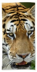 Beach Towel featuring the photograph Eyes Of The Tiger by John Haldane