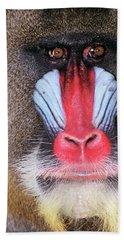 Face Of Male Mandrill Baboon Mandrillus Beach Towel
