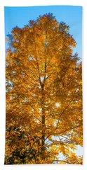 Fall Tree Beach Sheet