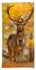 Fallow Deer In Autumn Forest Beach Towel by Roeselien Raimond