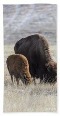 Bison Calf Having A Meal With Its Mother Beach Towel