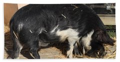 Farm Pig 7d27344 Beach Towel