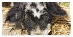Farm Pig 7d27361 Beach Towel