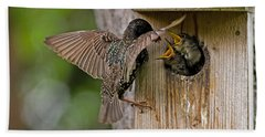 Feeding Starlings Beach Towel
