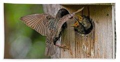 Feeding Starlings Beach Towel