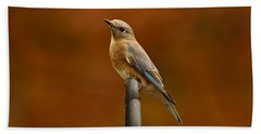 Female Bluebird Beach Towel