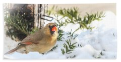 Female Cardinal At The Feeder In Winter Beach Towel
