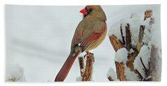 Female Cardinal In The Snow Beach Sheet