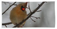 Female Cardinal In Winter Beach Towel by Dan Sproul