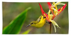 Female Olive Backed Sunbird Clings To Heliconia Plant Flower Singapore Beach Towel