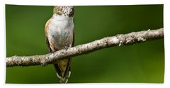 Beach Sheet featuring the photograph Female Rufous Hummingbird In A Tree by Jeff Goulden