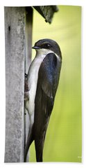 Tree Swallow On Nestbox Beach Towel by Christina Rollo