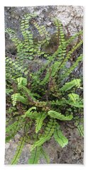 Fern Tendrils  Beach Sheet
