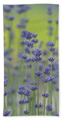 Field Of Lavender Flowers Beach Towel