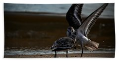 Fighting Sandpipers Beach Towel