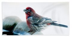 Beach Towel featuring the digital art Finch by Ann Lauwers