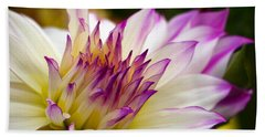 Beach Sheet featuring the photograph Fire And Ice - Dahlia by Jordan Blackstone