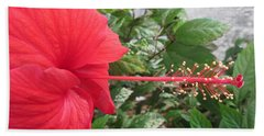 Fire And Ice Hibiscus Beach Towel