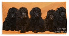 Five Poodle Puppies  Beach Towel