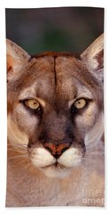 Florida Panther Beach Towel by Tom and Pat Leeson