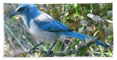 Florida Scrub Jay Beach Towel