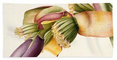 Flower Of The Banana Tree  Beach Towel by Georg Dionysius Ehret