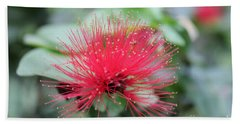 Beach Towel featuring the photograph Fluffy Pink Flower by Sergey Lukashin