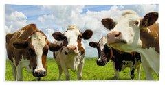 Four Chatting Cows Beach Sheet