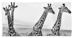 Four Giraffes Beach Towel by Adam Romanowicz