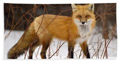 Fox In Winter Beach Sheet