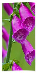 Foxglove Digitalis Purpurea Beach Sheet