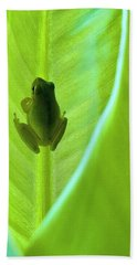 Beach Towel featuring the photograph Frog In Blankie by Faith Williams