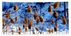 Beach Sheet featuring the photograph Fronds In Winter by Eleanor Abramson