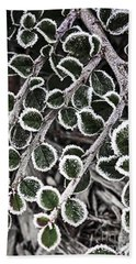 Frost On Plant Branch In Late Fall Beach Towel
