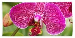 Fuchsia Moth Orchid Beach Towel
