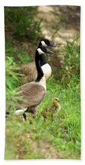 Geese And Gosling Beach Towel by Kim Pate