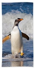 Gentoo Ashore Beach Sheet