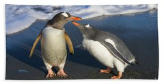 Gentoo Penguin Chick Begging For Food Beach Sheet by Yva Momatiuk and John Eastcott