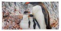 Gentoo Penguin Family Booth Isl Beach Sheet by Yva Momatiuk and John Eastcott