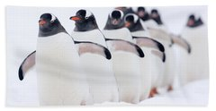 Gentoo Penguins In Line Cuverville Beach Towel by Alex Huizinga
