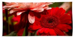 Beach Towel featuring the photograph Gerbera Daisies by Patrice Zinck