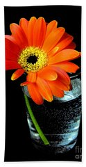 Beach Towel featuring the photograph Gerbera Daisy In Glass Of Water by Nina Ficur Feenan
