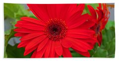 Gerbera Love Beach Sheet