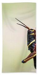 Giant Eastern Lubber Grasshopper Beach Towel by Edward Fielding
