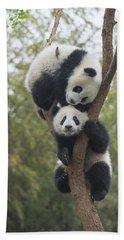 Giant Panda Cubs Playing Chengdu Beach Towel
