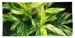 Beach Towel featuring the photograph Ginger Lily. Alpinia Zerumbet by Connie Fox