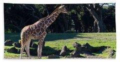 Giraffe Dsc2839 Beach Towel