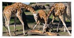 Giraffe Dsc2870 Beach Towel